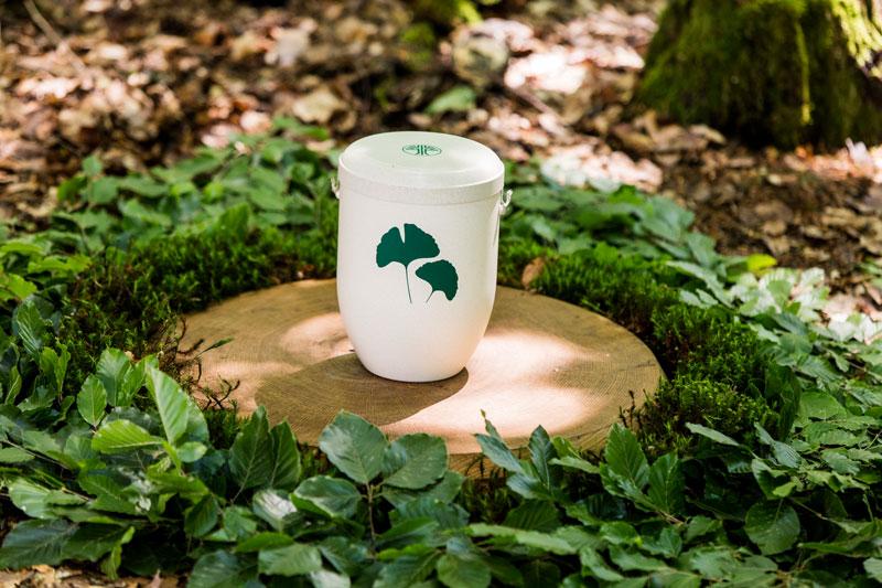 friedwald-urne-koeppelbestattungen